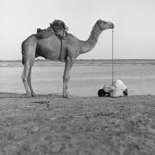 Maya Bracher Maure faisant sa prière, chameau en face