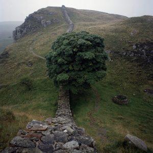 Ben Graville – 27 Sycamore Gap,Hadrians wall, England