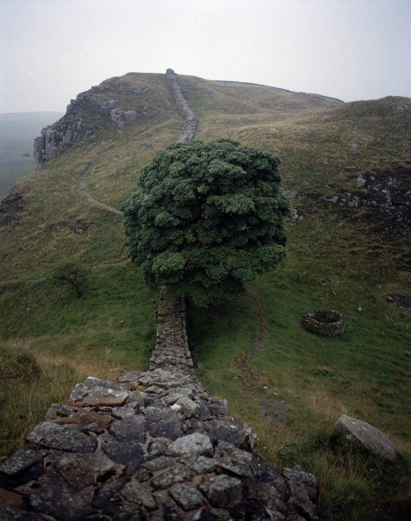 27 Sycamore Gap,Hadrians wall, England