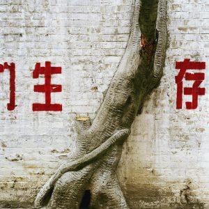 Laurent Gueneau – Question de Nature, Guangzhou, 2005